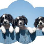 hond-dosering-en-samenstelling