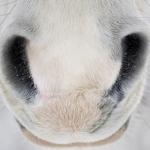 Cani-Syn voor kraakbeen en gewrichten