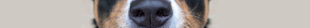 #hondenbeweegtip | Fun & fit