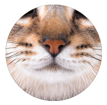Smaakmakers voor kattenkoppen