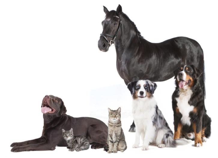 Zwarte bes-blad voor hond, kat en paard